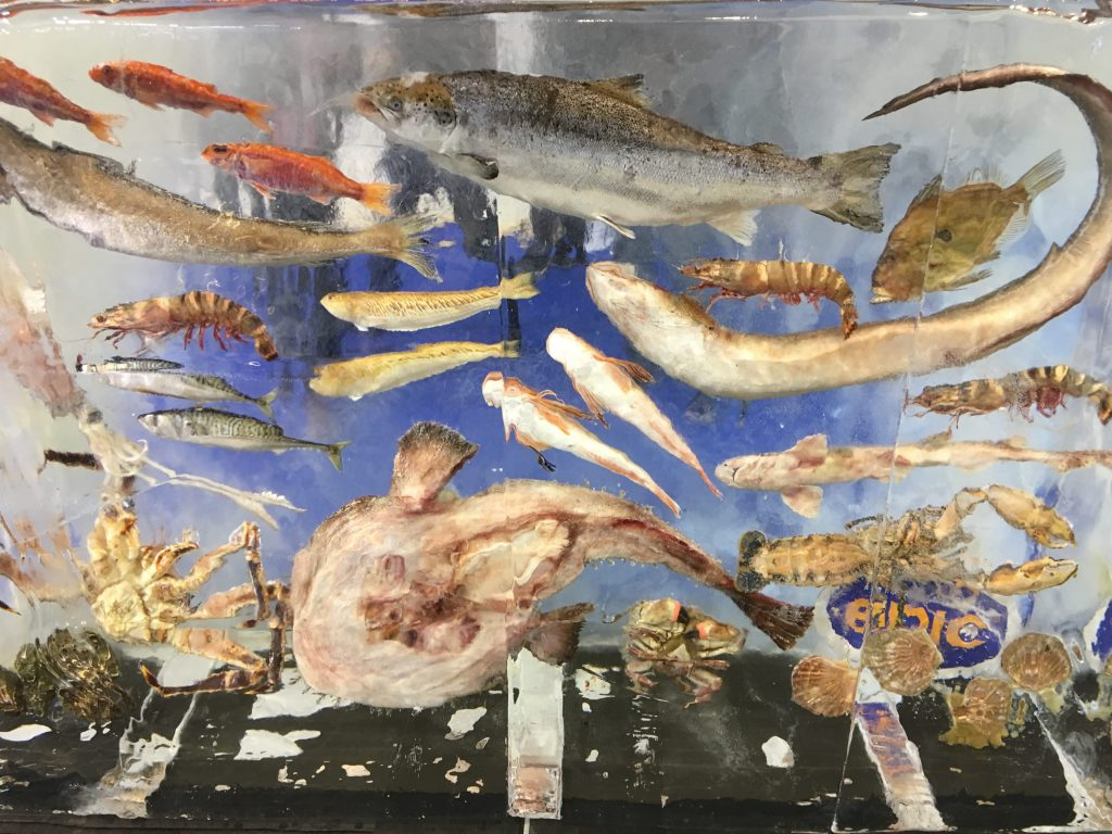 Frozen Seafood display at Seafood Expo Brussels