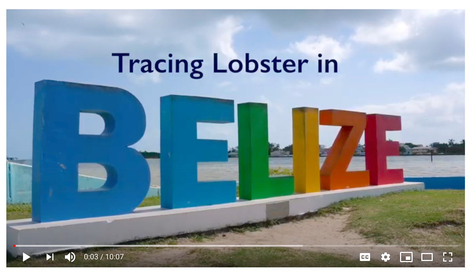 Tracing Lobster in Belize