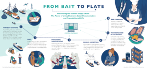 infographic showing the seafood supply chain from harvest/capture to end consumer. With the use of eCDT systems, data is captured via a central database in each step of the product's journey and accessible for verification of legality.