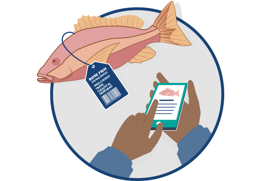 cartoon of fish with tag for tracing